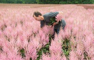 Van Aert Flowers zet bloemetjes buiten