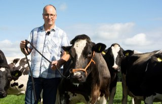 Fokje 26 is Flevolands oudste koe