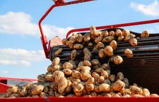 Aardappelmarkt+kan+nog+alle+kanten+op