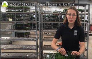 Glastuinbouw+Nederland+werft+jongeren+met+Vlogs+uit+de+Kas