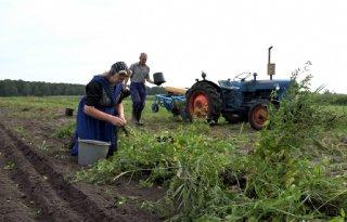 Fotograaf biedt uniek kijkje in Staphorster boerenleven