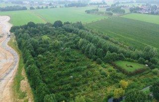 Agrifirm onderzoekt haalbaarheid voedselbossen