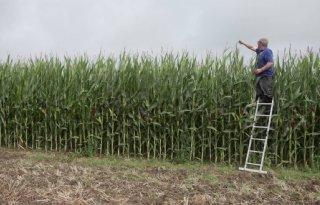 Guido Frijns: 'We hebben wintervoer zat, dus verkopen we wat mais'