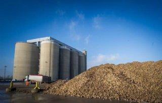 British Sugar vraagt om grote flexibiliteit bij start bietencampagne