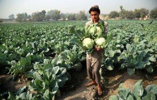 Financiering+landbouwonderwijs+Afghanistan+%27on+hold%27