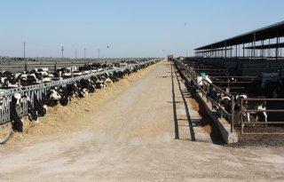 Melkveehouders VS gecompenseerd voor coronaverlies