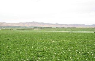 Herstel aardappelexport vanuit VS