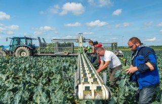 Groenteteler+gaf+bodem+impuls+na+overlast+en+afname+oogsten