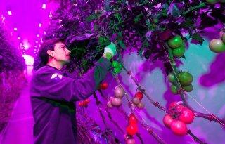 PlantLab breidt indoor farming in Amsterdam uit