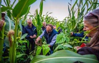 Friese boeren beproeven eiwitgewassen op veenweidegrond