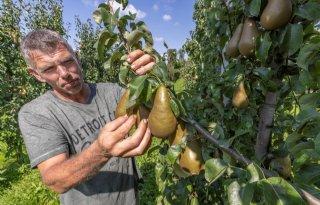 Fruitteler Toine Janssen: 'Als kraaien gaan vliegen, komen ze hier langs'