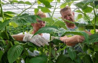 Gelderse kwekerij floreert door nicheproducten