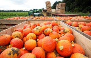 Europees project bestrijdt virus in tomaat en komkommerachtigen