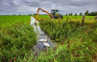 Friese boeren krijgen vergoeding voor overlast grote waternavel