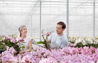 Glastuinbouw+Nederland+onderzoekt+werknemerstevredenheid+sector