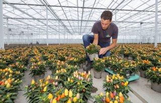Potplantenkweker: 'Afzet in de lift, omdat consument vaker de tuin in gaat'