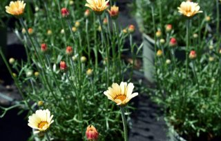 Keuringsdienst van waarde vindt neonics op bijvriendelijke planten