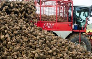 Gewassen+slijten+vroeg%2C+voor+mais+en+gras+zijn+opbrengsten+hoger