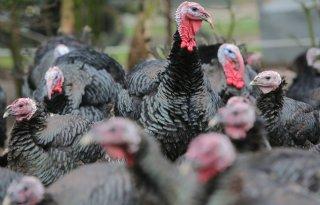 Groep EU-landen wil 'ambitieuze regelgeving' dierenwelzijn