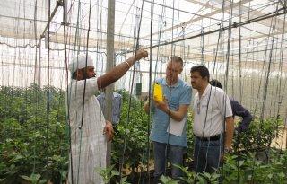 Indiase glastuinbouw groeit hard