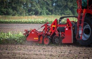 IRS waarschuwt voor rooiverliezen bij aantastingen bodemschimmel