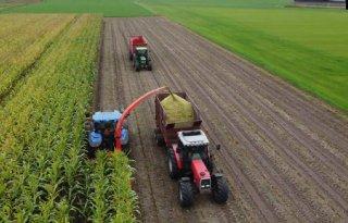 Mais op veel plaatsen al bijna klaar voor de oogst