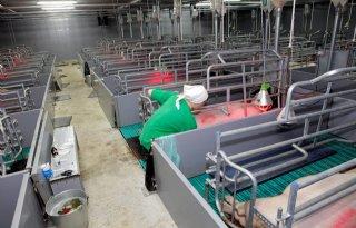 Grote Russische vleesproducent kampt met varkenspest
