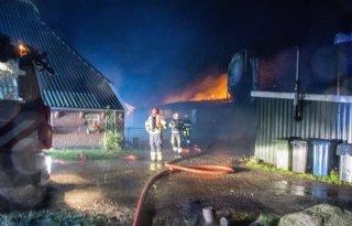 Geiten komen om bij brand in Kollum