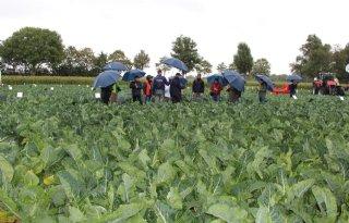 Syngenta werkt aan groenten op maat voor teler en consument