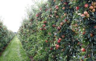 Appelbomen+nemen+beter+stikstof+op+in+voorjaar