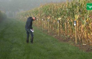 Groeiseizoen voor mais was te nat en koud