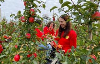 Tessa's plukken nieuw appelras Tessa