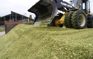 Eurofins Agro komt met kengetal broeigevoeligheid mais
