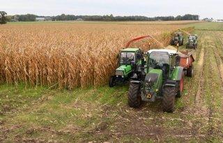 Vriendengroep hakselt mais op ouderwetse manier