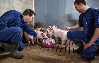 Pig-up-power wordt verder doorontwikkeld