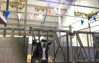 Jarige Harmke is oudste koe van Nederland