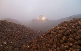 Suikerfabrieken draaien volop