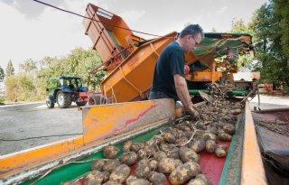 65 procent aardappelen gerooid