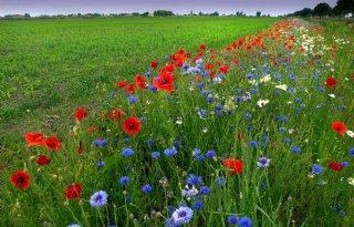 '3 pakketten agrarisch natuurbeheer volstaan'