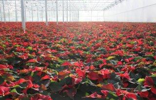 Minder bloemen verkocht in de winter