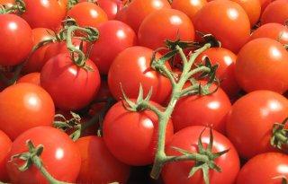 VS+breekt+tomatenakkoord+Mexico