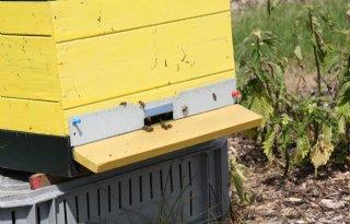 Onderzoek naar bijen op gasvelden