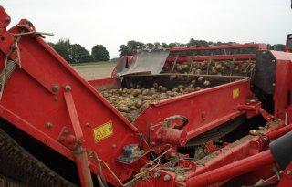 Aardappeloogst België hoger dan verwacht
