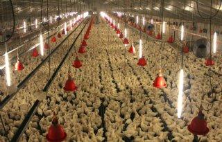 Kamer: doelen stellen dierwelzijn pluimvee