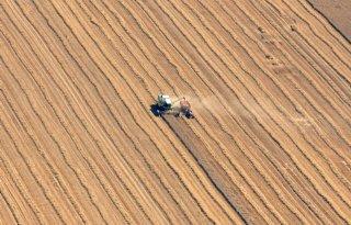 Minder tarwe volgens USDA-raming