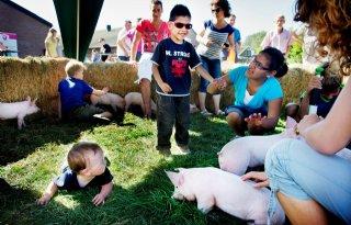 Zorg+over+varkenshouderij+leeft+bij+velen