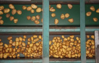 Britten+oogsten+15%25+minder+aardappelen