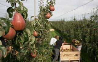 Fruitteelt: minder uitbreidingsplannen