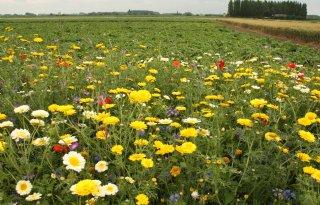 Deltaplan+helpt+bij+herstel+biodiversiteit