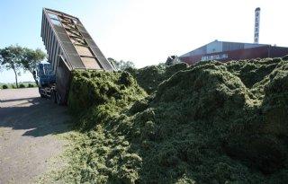 Grasdrogerij droogt luzerne langer op veld